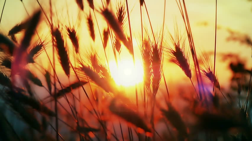 sunset grass slow motion #30855322