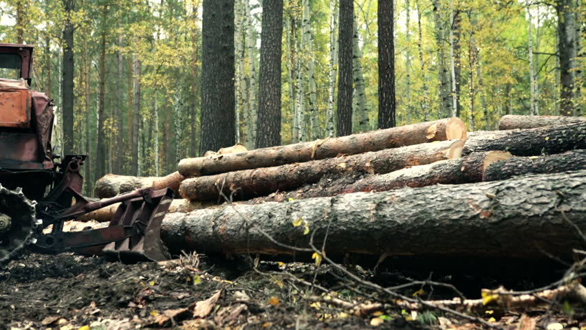 Tractor adds up felled timber into a heap