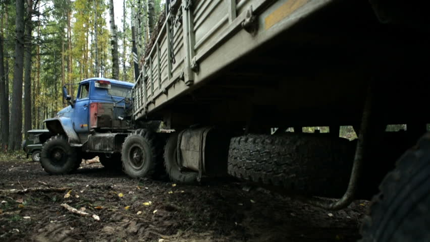 Truck takes away felled trees in the forest