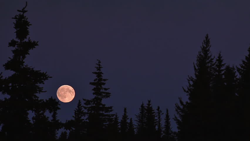 Full moon rising, becomes partially obscured by a spruce tree. Early evening moon rise with red sunset yields a warm reddish cast to the moon.