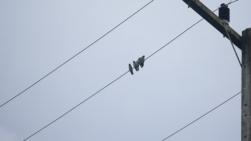 The Dove On Electric Wires With Sky Background Between Light ...