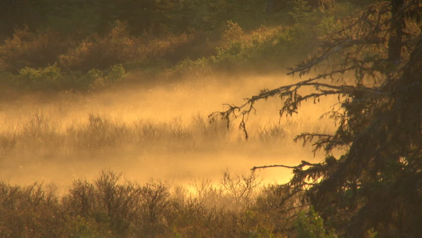 Mist in a hollow in the early morning, a dead spruce tree adding to the haunting effect.