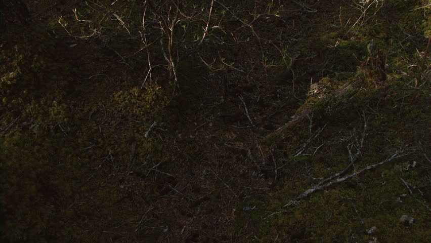 Tilt up from Forest Floor Stock Footage