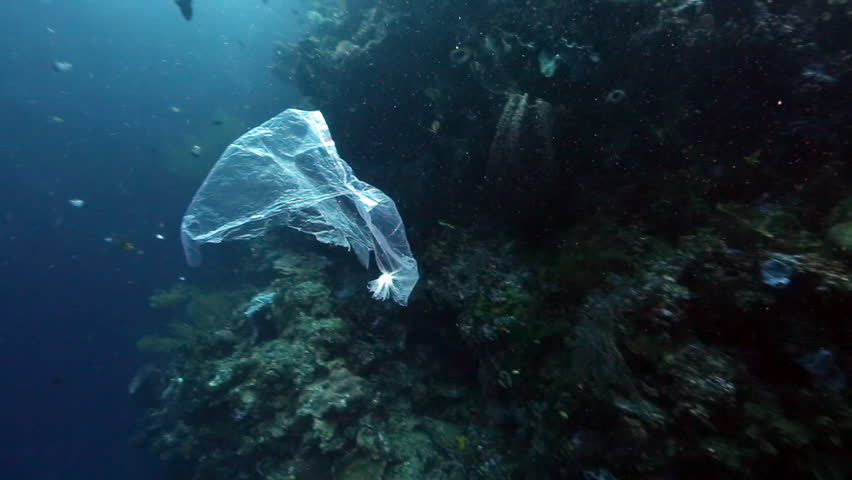 Plastic bag floating past coral reef wall underwater at Bunaken Island, Indonesia
