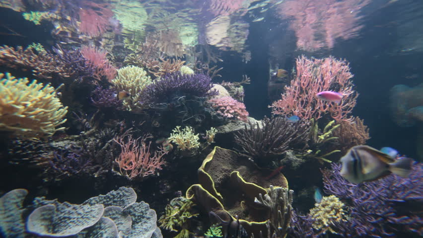 Underwater scene with colorful tropical fishes and corals