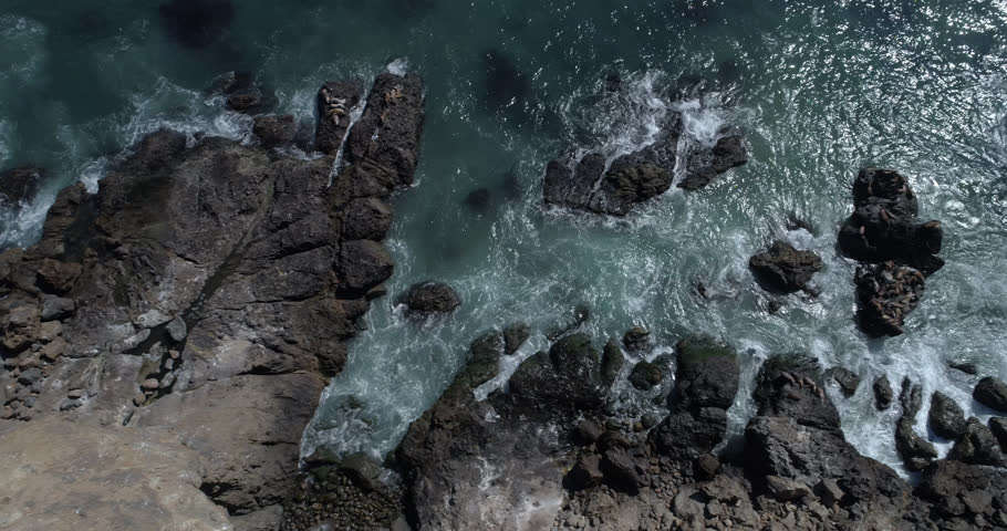 Aerial Malibu Zuma Ridge Sea Lions, Seals and seagulls.  Clear perfect day Shot on Phantom 4 Drone Pro H265 converted to Prores 4444 4k DCI source