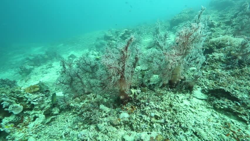 Tree coral at Kakaban Island, Kalimantan #31306402