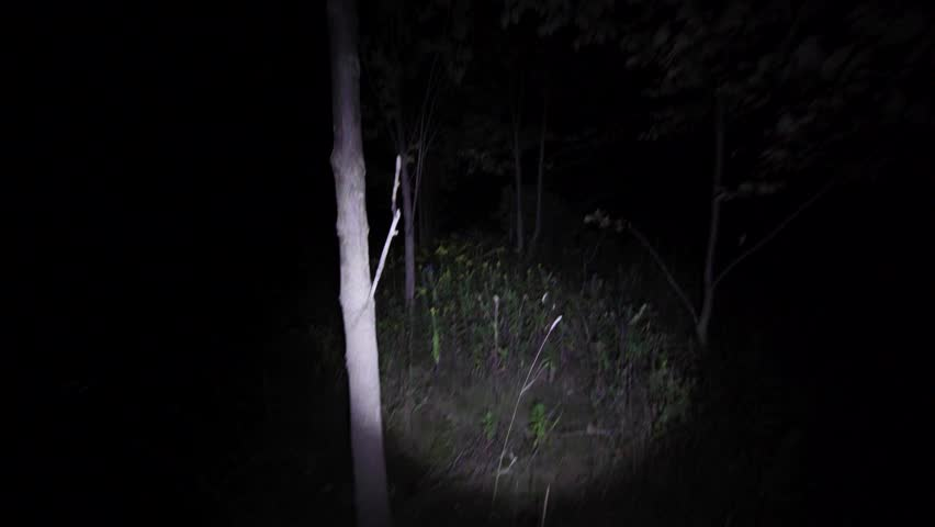 Unstable walking lost on the woods at night. Hesitating to find the way in the dark with only flashlight to light the way in scary forest on Halloween. Escaping in the bushes in the dead of night.
