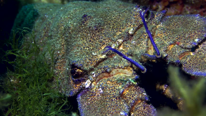 Crab Under The Sea. Underwater world. Diving and Snorkelling. Sea bottom. Colourful sea.