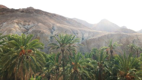 Beautiful oasis in Africa. Palm trees and rocky mountains.Amazing nature. 4K video.