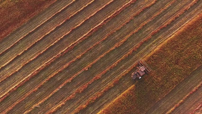 Combine Harvesting autumn red Field in Sunset. Agriculture food production, harvest concept. Aerial view of tractor plowing a field. Agricultural machine plows the field, leaving furrows. Harvesting