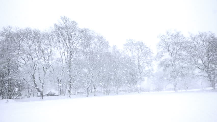 Falling snow in a winter park with snow covered trees, slow motion, filmed at 60p | Shutterstock HD Video #3178849