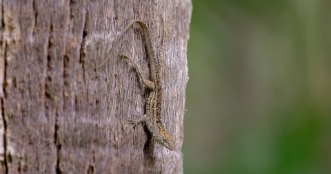 Green anole lizard on a tree with red neck
