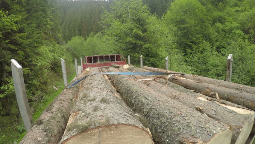 Logging truck with full load of fresh cut trees driving up forest road