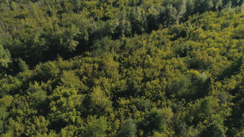 Top view from the drone to the forest. | Shutterstock HD Video #31908802