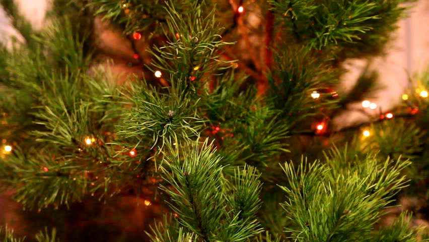 Evergreen Christmas.Live Christmas Tree Evergreen Branch Stock Footage Video 100 Royalty Free 3192562 Shutterstock