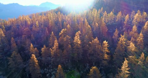 forward aerial over alpine mountain valley orange and red larch forest woods in sunny autumn.Europe Alps outdoor colorful nature scape mountains wild fall establisher.4k drone flight establishing shot
