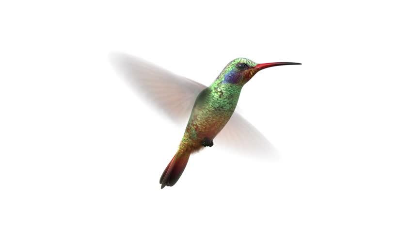Rotating humming bird, seamless looping 3d animation, alpha-matte | Shutterstock HD Video #3195082