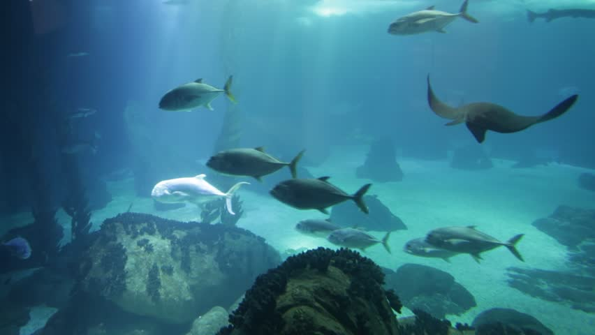 Undersea marine life. Underwater blue background with sunbeams. Manta Ray, shark and schools of fish cruises over the deep seafloor. | Shutterstock HD Video #32185762
