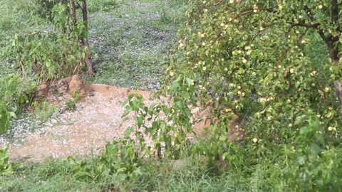 Large hailstones fall to the ground in apple garden