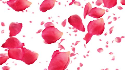 Flying rose petals on white. HD 1080. Looped animation.