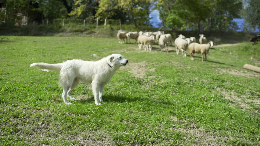 Audio Clips Of Dogs Barking