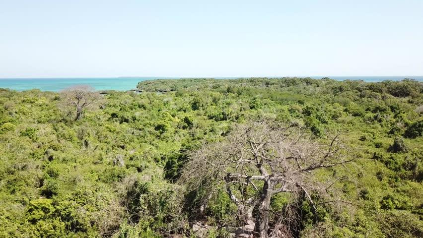 Flying past baobab and lush green acacia trees