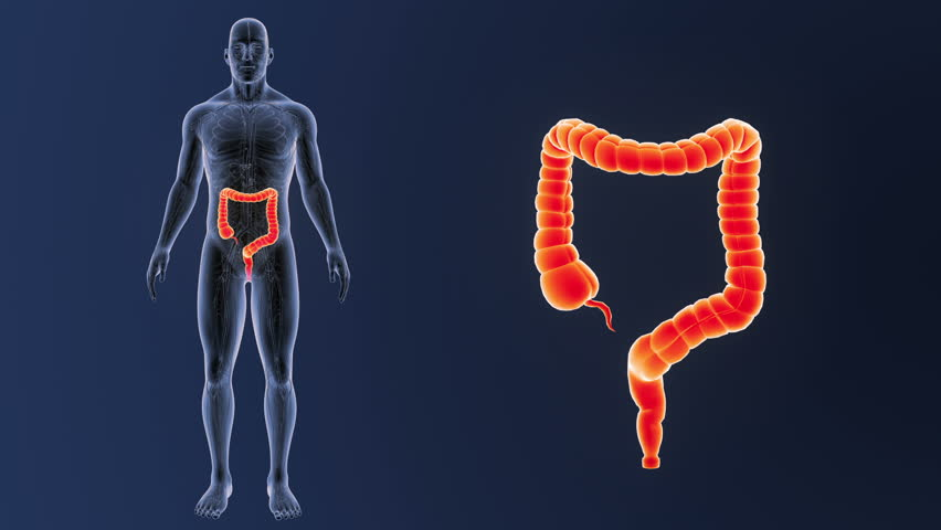 Stock video of female colon anatomy details black x-ray | 1371529 ...