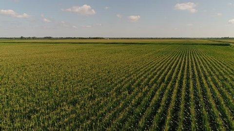 Aerial drone shot of a corn field in Nebraska.