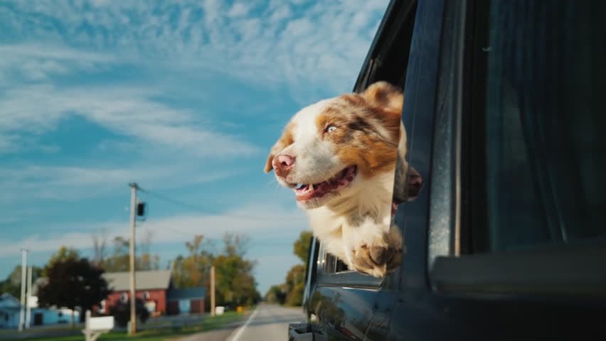 A curious dog looks out the car window, which rides through a small town. Against the background of a beautiful sky | Shutterstock HD Video #33172102