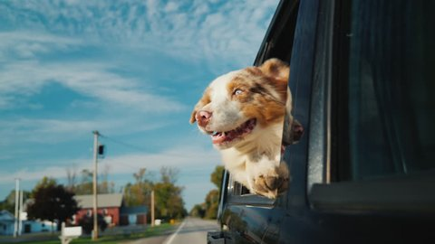 A curious dog looks out the car window, which rides through a small town. Against the background of a beautiful sky