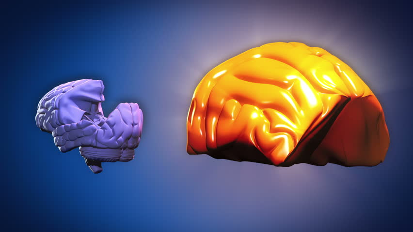 Stock video of highlighted brain parts anatomy 3322082 shutterstock ccuart Gallery