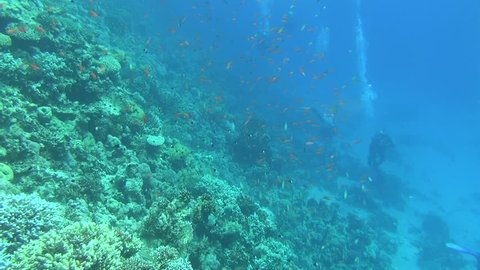 divers on the reef 02
