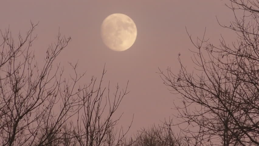 Waxing Gibbous Almost Full Moon Rise in Sunset Through Trees