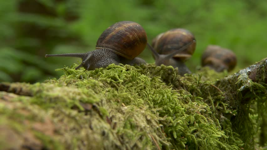 Tracking time lapse snails 5. The camera glides cinematically after snails as they explore a forest. I shot these at real time (25fps) so the speed choice is yours, but you will need to contact me