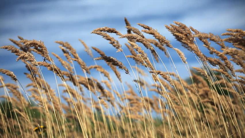 Green Grass Field Big City Park Stock Photo 134799638 - Shutterstock