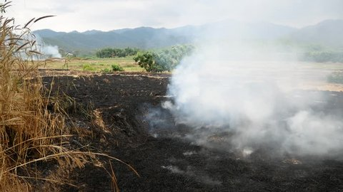 Traditional straw burning in thailand, stubble burning, slash and burn, clearing and regenerating, field with fire