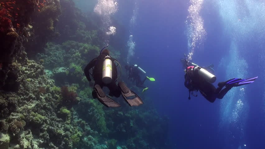 Scuba diving near school of fish in coral reef relax underwater Red sea. Video about marine nature on background of beautiful lagoon.