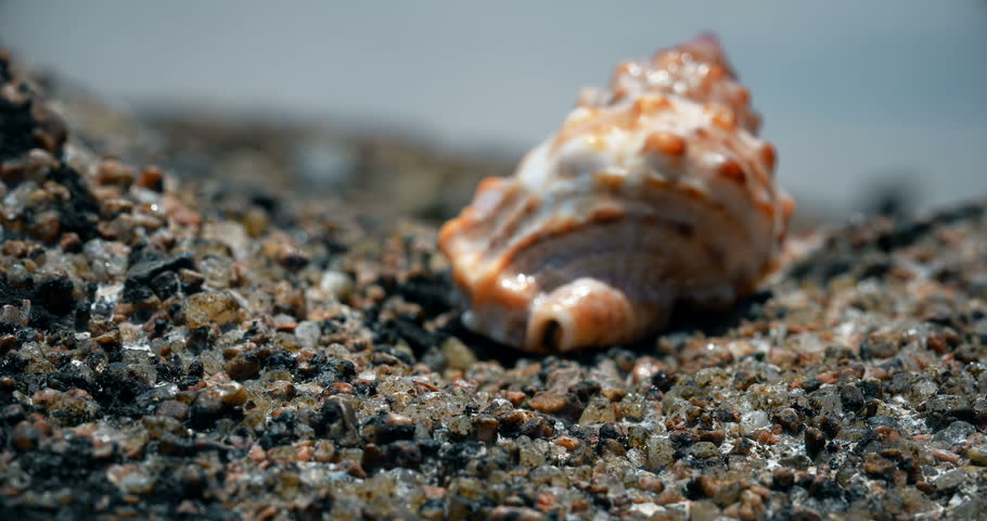crab comes out of the shell in sea background. Hermit crab. | Shutterstock HD Video #33840382