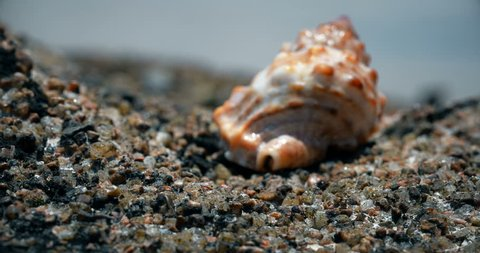 crab comes out of the shell in sea background. Hermit crab.