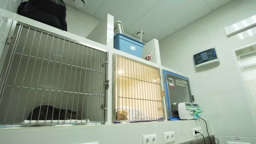 Dog and cat in a cage on recovery from an operation in a veterinary clinic. Postoperative hospital in an animal hospital with cages for pets. Hotel for pets.