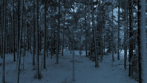 Dark snowy forest dolly shot. Moving between trees in the dark snowy forest in winter. Magical and mystical forest dolly shot.