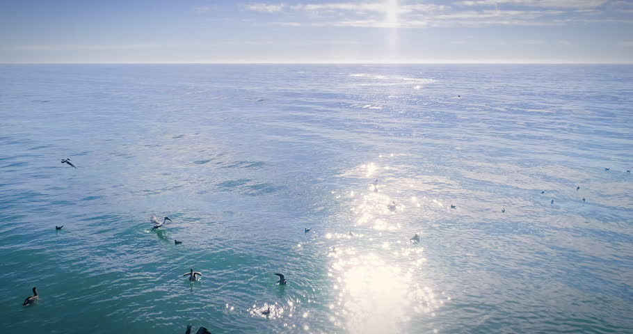 Aerial drone view of pelican birds flying over the ocean. Santa Cruz, USA | Shutterstock HD Video #34058722