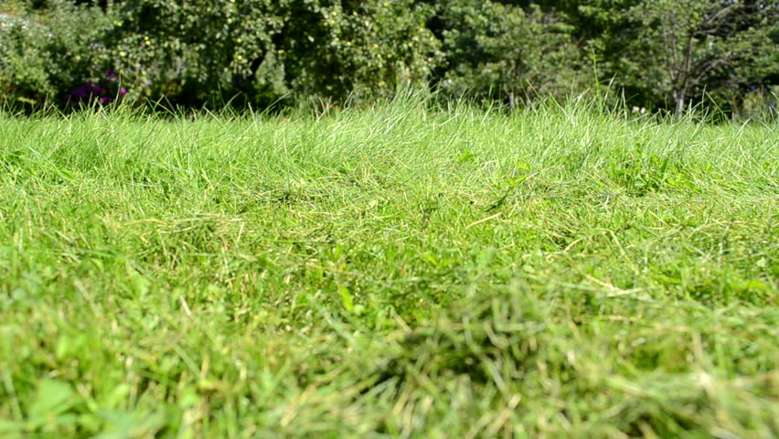 meadow grass closeup and lawn cutter mower worker pass