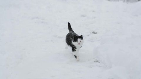 black and white cat running through the snow slow-motion shooting