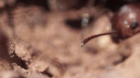 Ants Heads Macro Closeup Slow Motion Detail
