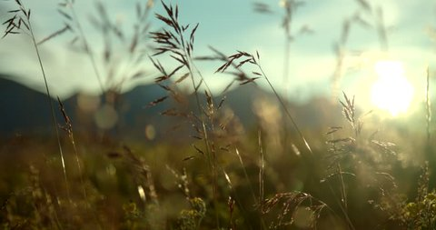 Flowers in August. A beautiful evening sunset in the Yukon Territory Canada. Cinematic sliding shots