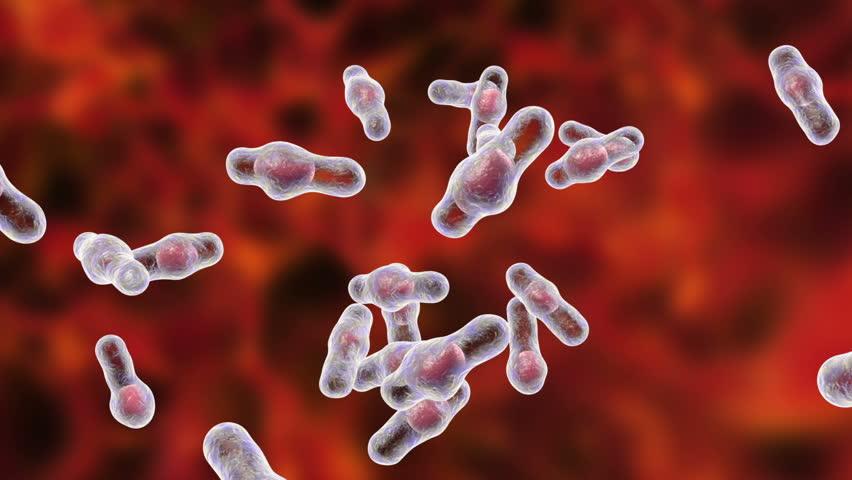 Споры бактерий фото