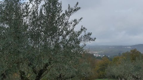Olive trees with the landscape of Portuguese village of Valada on the background, Ourém, Portugal during the winter seasson