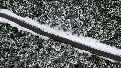 Panoramic view of snowy mountains with big green trees in snow. Bird's eye view of wild flora in Ukrainian Carpathians Mountains